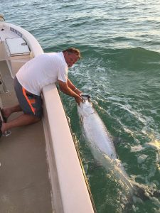 tarpon along side the boat