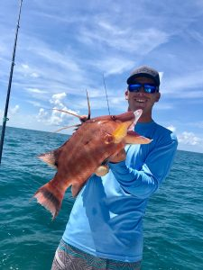 Man obsessed with catching hogfish in Sarasota